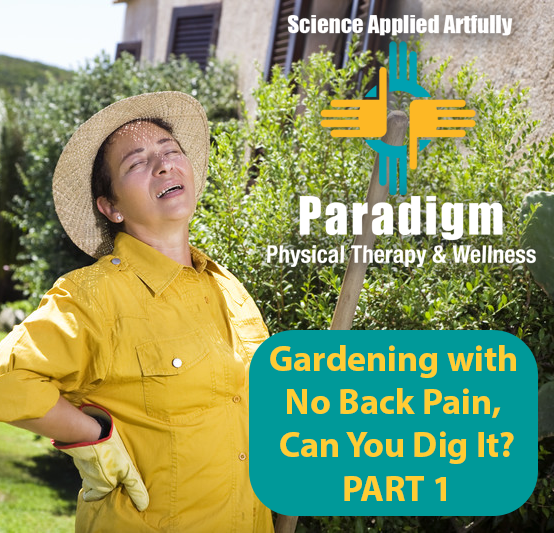 No Back Pain, Can You Dig It?:  Gardening tips to avoid straining your back – PART 1