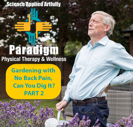 No Back Pain, Can You Dig It?:  Gardening tips to avoid straining your back – PART 2